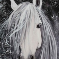 cheval-facebook