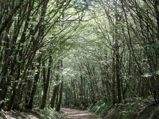 Chemin de randonnée autour du lac du Rousset
