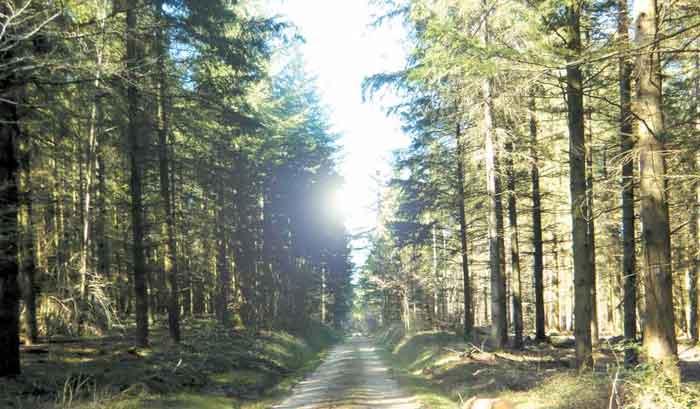 Photographie Forêt Le Rousset